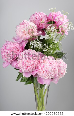 bouquet of pink peonies on a gray background - stock photo
