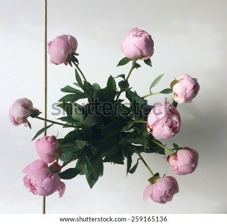 Bouquet of pink peonies on white - stock photo