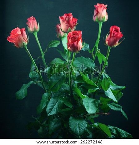 Bouquet of pink rose flowers with leaves on dark background. Filtered toned image. Shallow DOF. - stock photo