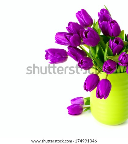 Bouquet of purple tulips in a vase on a white background, isolated with copy space. Greeting card. - stock photo