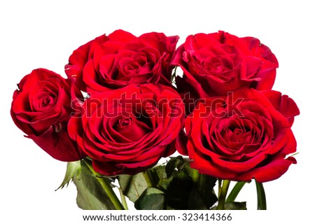 Bouquet of red blooming roses on white - stock photo