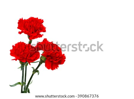 Bouquet of red carnations (Dianthus caryophyllus) on white background with space for text - stock photo