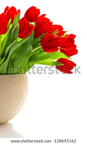 bouquet of red fresh spring tulip flowers over white background - stock photo