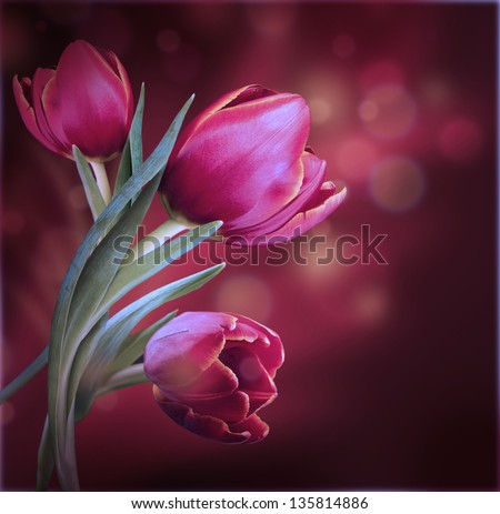 Bouquet of red tulips against a dark background - stock photo