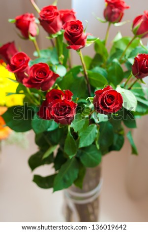 background dozen red roses isolated on red natural roses background
