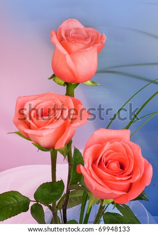Bouquet of roses on blue background - stock photo