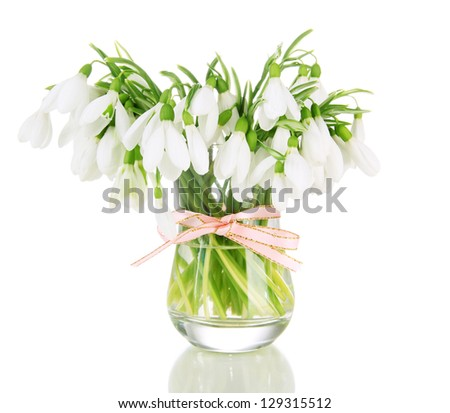 Bouquet of snowdrop flowers in glass vase, isolated on white