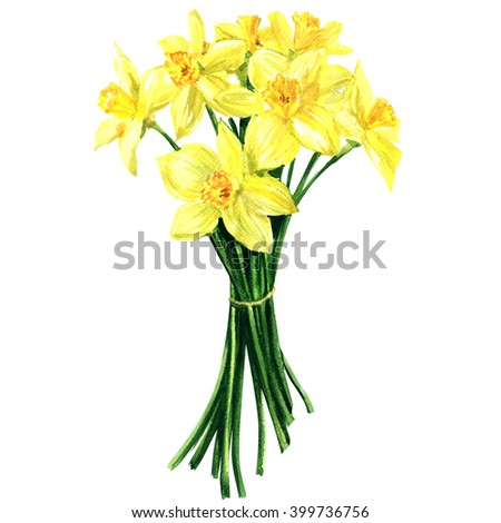 Bouquet of spring flowers narcissus isolated, watercolor illustration