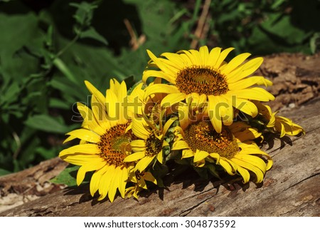 Bouquet of sunflowers on an old stump, selective focus