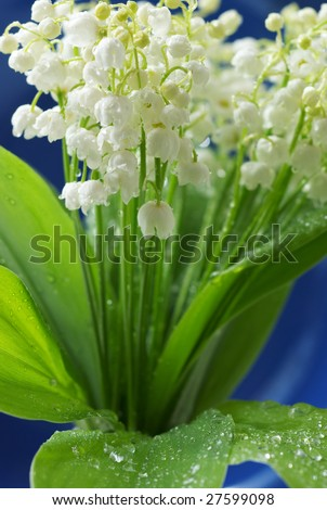 Bouquet of the lily of the valley on blue background. Shallow DOF. - stock photo
