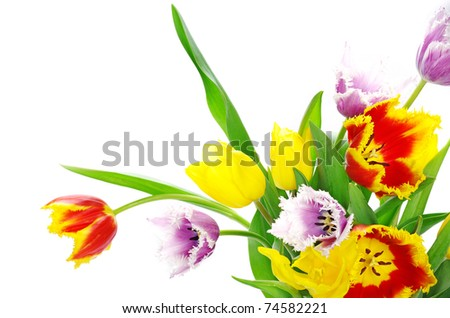 bouquet of the tulips - stock photo