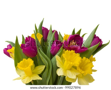 bouquet of tulips and daffodils  isolated on white background - stock photo