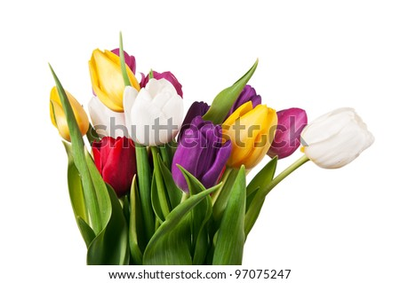 bouquet of tulips isolated on a white background