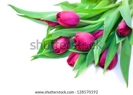 Bouquet of Tulips isolated on white - stock photo