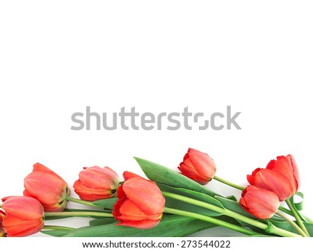 Bouquet of tulips isolated on white background with space for message. Mother's Day background. - stock photo