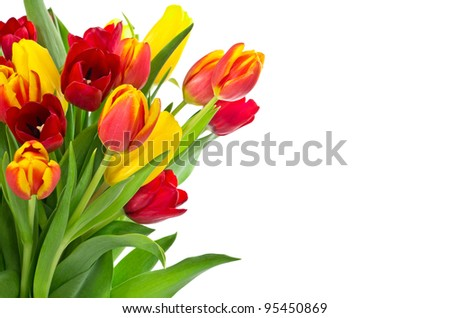Bouquet of tulips over white for greeting card