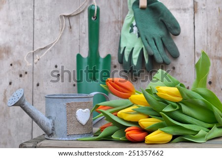 bouquet of tulips placed in front gardening tools on a wooden background - stock photo