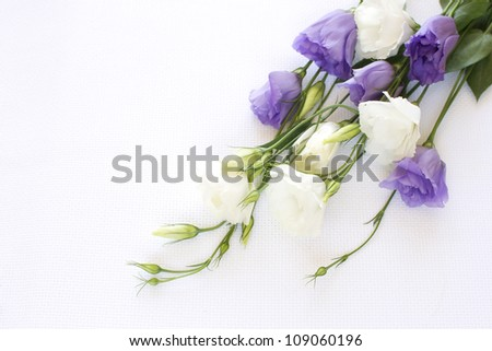 Bouquet of white and violet eustoma flowers on a white linen background - stock photo