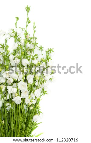 bouquet of white bells isolated on white - stock photo