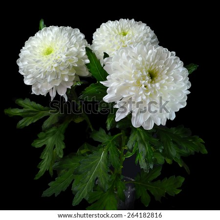 Bouquet of white chrysanthemums  in a crystal vase isolated on black background - stock photo