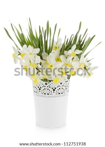 Bouquet of white daffodils in flowerpot. Isolated on white background