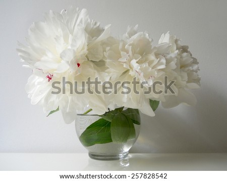 Bouquet of white peonies in a vase. Floral still life with peony flowers. Home decoration. - stock photo