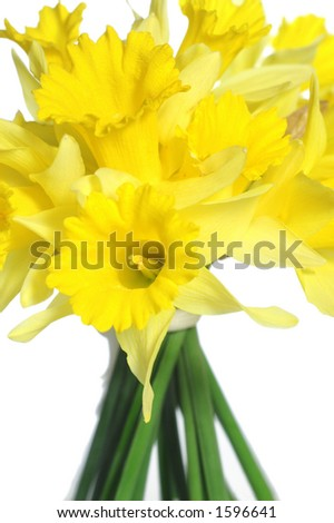 Bouquet of yellow daffodils isolated on white. - stock photo