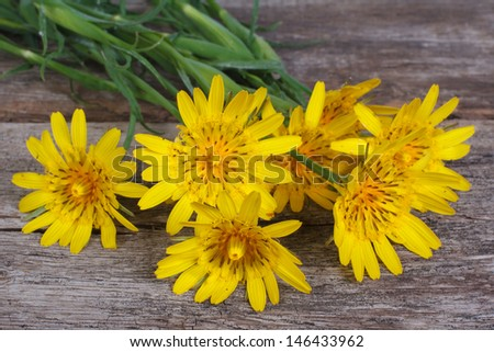 Bouquet of yellow flowers salsify on a wooden table  - stock photo