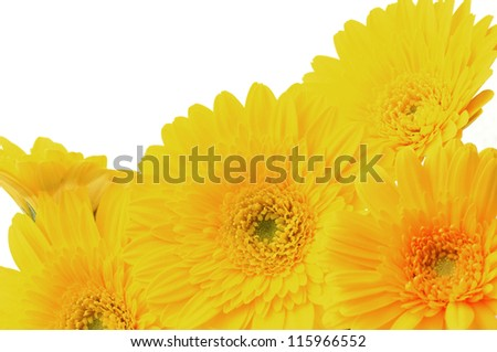 bouquet of yellow gerbera flowers