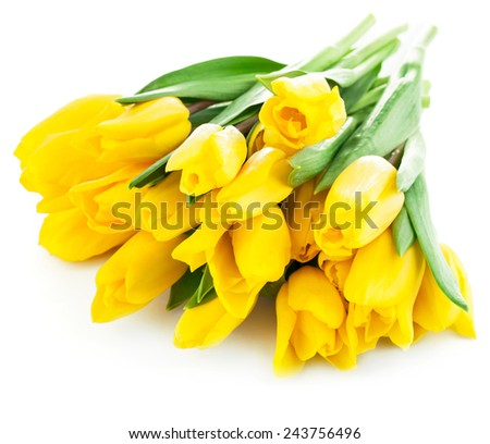 bouquet of yellow tulip flowers isolated on white background - stock photo