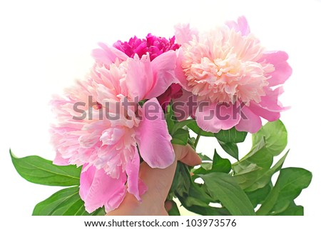 Bouquet Peony Flowers in hand on white background