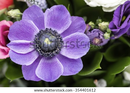 Bouquet. Purple anemone is in the foreground - stock photo