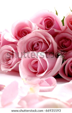 Bouquet rose, petals on white background - stock photo