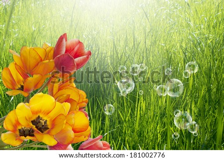 Bouquet Tulips on abstract Spring nature background.Easter