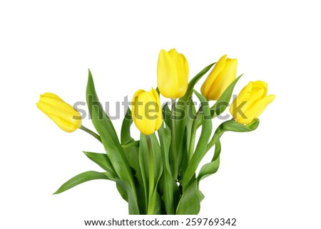 Bouquet yellow tulips isolated on white - stock photo