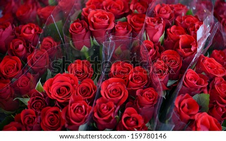 Bouquets of beautiful roses - stock photo