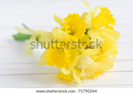 bouqut of yellow lent lilyl (daffodil) on white wooden background. - stock photo
