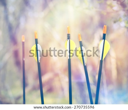 Bow Arrows Sport archery concept summer nature on background  - stock photo