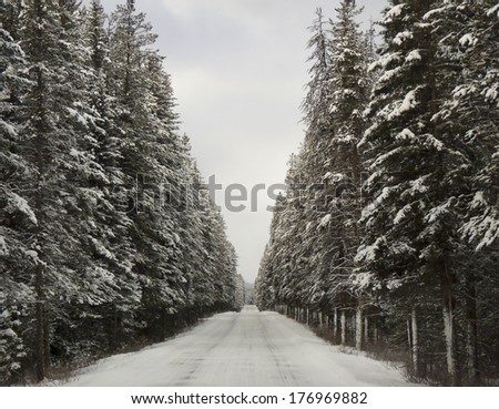 Bow Valley Parkway - Alberta - Canada - stock photo