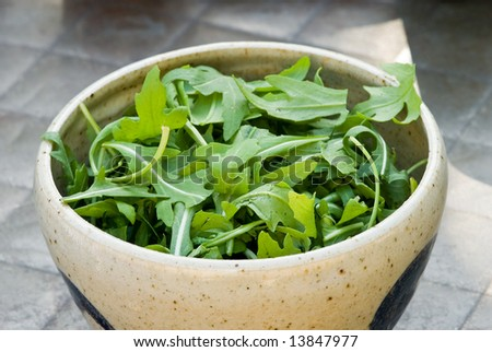 Bowl of Fresh Arugala - stock photo