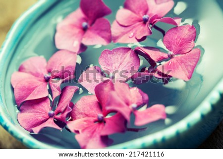 Bowl of water with pink hydrangeas. Spa concept