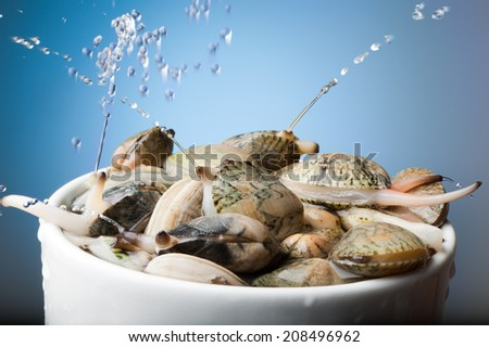 Bowl with clams throwing water jets - stock photo