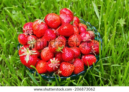 Bowl with strawberries in a green grass
