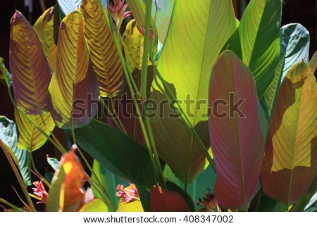 bown and green leaf tree  - stock photo