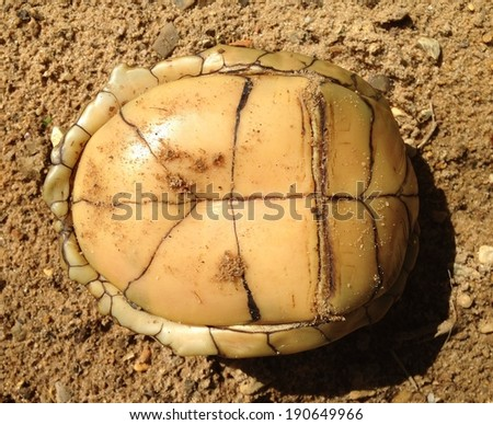 Box turtle at the University of Mississippi Field Station - stock photo