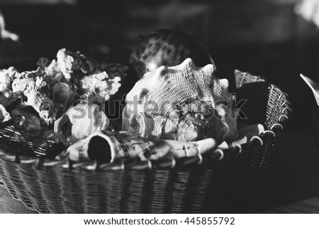 Box with tropical shells, and amulets. Tropical shells and corals lying in a designer box. Tropical mood - stock photo