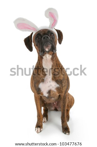 Boxer Dog with Bunny Ears - stock photo