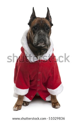 Boxer in Santa coat, 9 years old, sitting in front of white background - stock photo