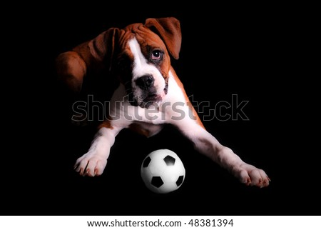Boxer Puppy with Toy Soccer Ball - stock photo