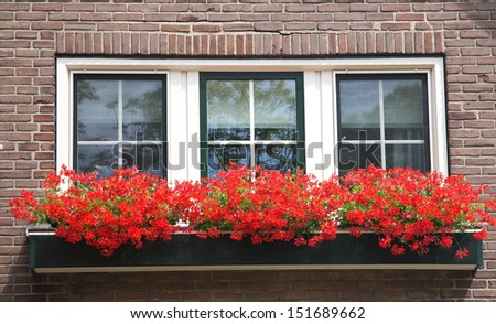 Boxes of flowers before window - stock photo